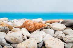 Stenar och snäckskal på stranden med Royaltyfri Bild