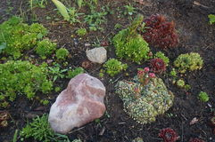 Stenar och växter i trädgården Arkivbilder