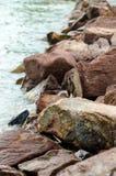 Stenar på strandkanten Royaltyfri Foto