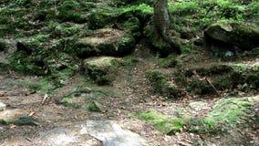 Stenar som är bevuxna med mossa