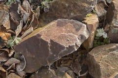 Stenar som täckas med frost Arkivbild