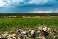 Stenar täckas med mossa, stenar och torkat gräs mot bakgrunden av ett grön fält och skog arkivfoto