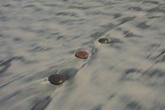 Stenar Torrey Pines State Beach Royaltyfri Bild