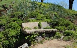 Stenbänk i suckulentträdgård Arkivbild