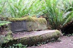 Stenbänk på Jedediah Smith Redwoods Royaltyfri Fotografi