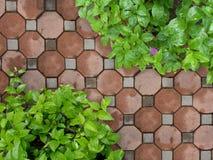 Stenbana i trädgård Arkivfoton
