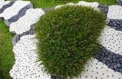 Stenbanaspolning i vårgrästrädgård Royaltyfri Bild