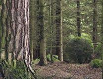 Stenblock i skog Royaltyfri Fotografi