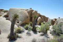 Stenblock och Joshua Trees i Joshua Tree National Park Arkivfoto