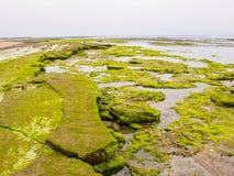 Stenblock som täckas med alger på den atlantiska kusten, Marocko Arkivbild