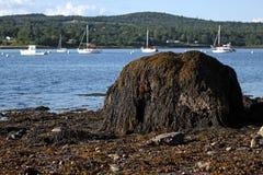 stenblockkusten räknade maine seaweed royaltyfria foton