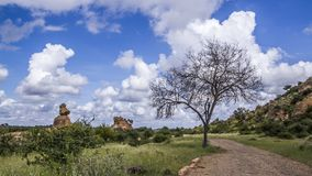 Stenblocklandskap i den Mapungubwe nationalparken, Sydafrika Arkivfoto