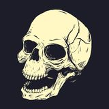 Stencil of skull. Vector clip art. Stencil of skull isolated on dark background. Vector clip art Royalty Free Stock Photography