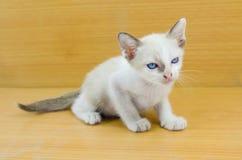 Stående av den blåögda katten på vit bakgrund Royaltyfri Bild