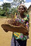 Stående av den ugandiska kvinnan som skördar röda bönor Arkivfoto