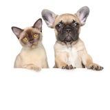 Stående av en katt och en hund på ett vitt baner Arkivfoto