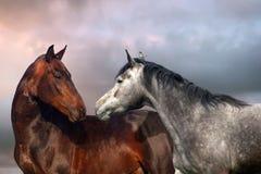 Stående för två häst Arkivbild
