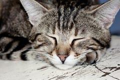 Ståenden av brunt gjorde randig katten som sover på den vit knäckte bränningen Arkivfoto