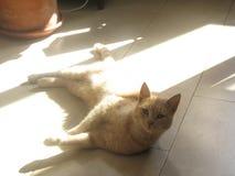 Stenditura del gatto Fotografia Stock Libera da Diritti