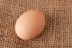 Stenditura dell'uovo sulla iuta Fotografie Stock Libere da Diritti