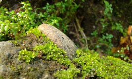 Stenen royaltyfria bilder