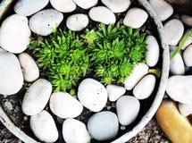 stenen Stock Foto's