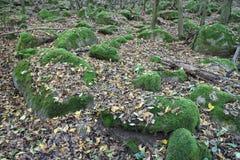 Stenen in bos Stock Foto's