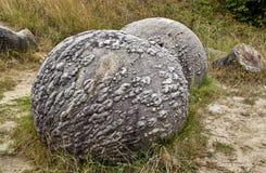Stenen die groeien Royalty-vrije Stock Fotografie