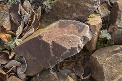 Stenen die met vorst worden behandeld Stock Fotografie