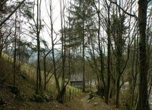 Stenen en aardeweg door de bos, gevallen die bladeren ter plaatse, rotsen met mos worden behandeld, stil, stil, de herfstlandscha stock foto's