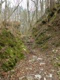 Stenen en aardeweg door de bos, gevallen die bladeren ter plaatse, rotsen met mos worden behandeld, stil, stil, de herfstlandscha stock fotografie