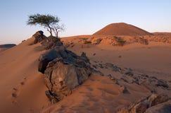 Stenen en Acacia in de Woestijn Stock Afbeeldingen