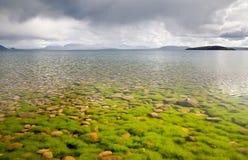 Stenen en algen die door het water worden gezien Stock Foto