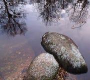 Stenen en bezinningen van bomen in het water Royalty-vrije Stock Foto