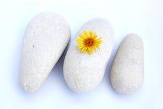 Stenen en bloem Stock Foto's
