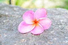 Stenen en bloem Royalty-vrije Stock Afbeelding