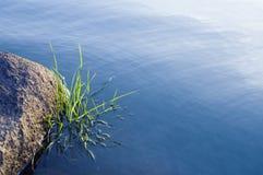 Stenen en gras in waterspiegel Stock Afbeelding
