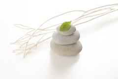 Stenen en groen blad Royalty-vrije Stock Fotografie