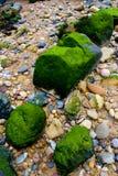 Stenen en mossen Royalty-vrije Stock Afbeelding