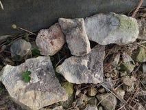Stenen en rotsen met fossielen stock foto's