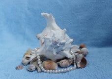 Stenen en shells Royalty-vrije Stock Afbeeldingen