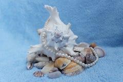 Stenen en shells Stock Afbeelding