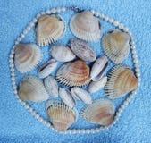 Stenen en shells Stock Foto's