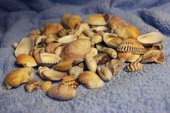 Stenen en shells Royalty-vrije Stock Fotografie