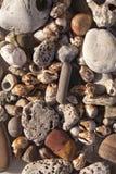 Stenen en shells stock foto