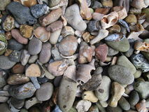 Stenen en shells Stock Fotografie