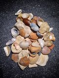 Stenen en shells in duisternis Stock Foto's