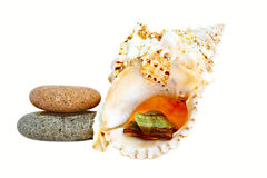 Stenen en zeeschelp stock foto's