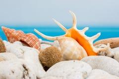 Stenen en zeeschelp op het strand Stock Foto's