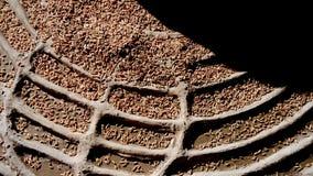 Stenen gjorde konst med rowrice Fotografering för Bildbyråer